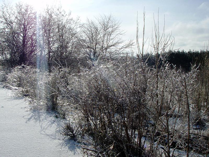 База Чайка. Зимний отдых
